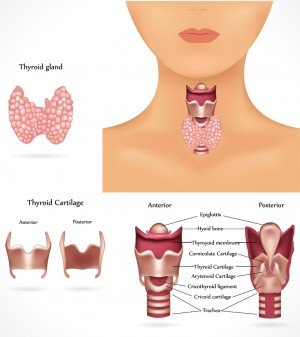 Thyroid Cancer, Oncology Hematology Care, OHC, Cancer Treatment, Cincinnati Cancer Treatment, cancer, cancer help, cancer care